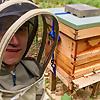 Sam T's Bees | A diary of a beginner beekeeper