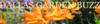 DALLAS GARDEN BUZZ | North Texas Water Wise Gardening Blog
