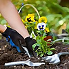 Blue Grass | Calgary Gardening Tools Blog