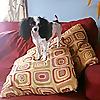 AHB Pet & Home Care Blog