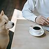 Pet Insurance Australia