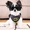 ipartywithbrucewayne | Dog Lifestyle Blog
