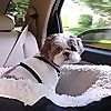 Shih Tzu Dog Blog