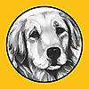 As Good As Gold | Golden Retriever Rescue of Illinois News Blog