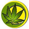 Weed.co.za Blog