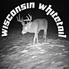 Wisconsin Whitetail