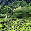 Cameron Highlands Travel Forums