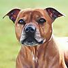 Zara's Pet Portraits & Wildlife Art
