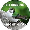 I'm Birding Right Now