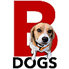 Beagle & Dogs