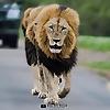 Big on Wild