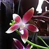 Rebecca's Orchids