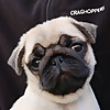 That Pug Pablo & Co