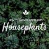 Exotic Tropical Houseplants