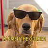 Carmen The Golden Retriever