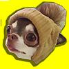 Chihuahua Fondue