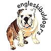 Rabl the English Bulldog