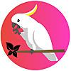Deepan Exotic Birds