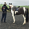 Little Glengyre Livery and Equine Services