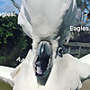 Pickles The Cockatoo