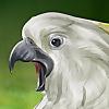 Nigel The Crazy Cockatoo