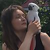Zhu the Baby Cockatoo
