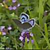 The National Trust's Large Blue Blog