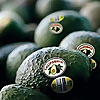 California Avocados | The Scoop Blog