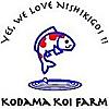 Kodama Koi Farm Blog