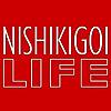 Nishikigoi.Life Blog