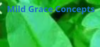Mild Grace Concepts | Reliable Online Resource in Nigeria