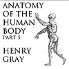 Anatomy of the Human Body, Part 5 by Henry Gray