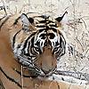 Ranthambore National Park Blog
