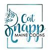 CAT KNAPP MAINE COONS