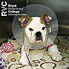 Veterinary Clinical Podcasts