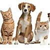 Veterinary Advice, Animal News & Views with hosts