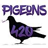 Pigeons 420