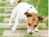 WKD Online Dog Training Courses