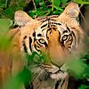 DiscoverWildIndia