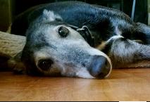 Greyhound Options Inc.