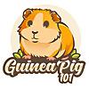 GUINEA PIG 101