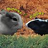 Baby Guinea Pigs-Philippines