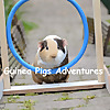 Guinea Pigs Adventures