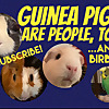 Guinea Pigs Are People, Too and Bird
