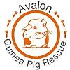 Avalon Guinea Pig Rescue