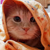 My Kitti Cats
