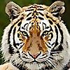TigerSports