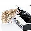 Piano - Sheet Music