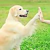 Wonder Dogs Orange County
