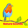 Nature Sounds YouTube Channel